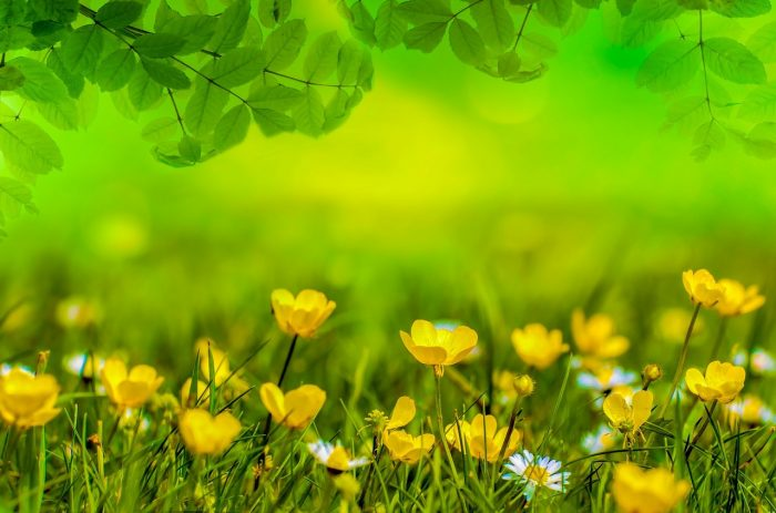 Frühling, Kräuterwanderung, Kräuter